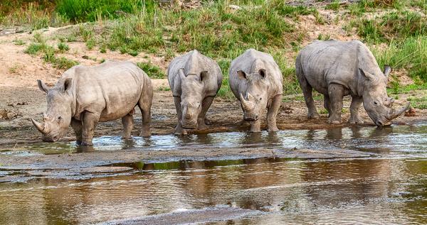 AD Comm_Pete Turner_White Rhinos