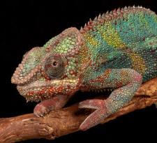 AD Third_P Keegan_Gecko on branch