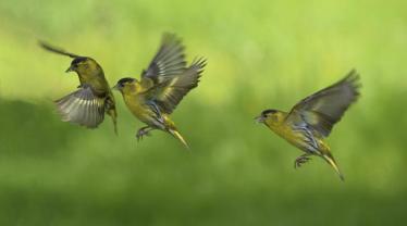 P Comm_John Quinn _Siskin landing