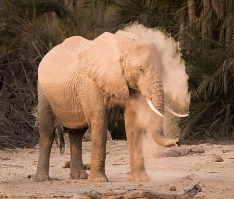 Elephant Enjoying Dust Bath Patricia Keegan 10